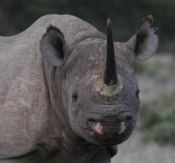 Save Valley Rhino Conservancy