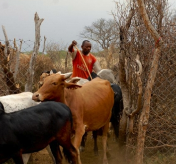 Maasai Steppe Predator-Proof Bomas