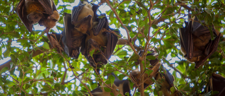 Bat | African Wildlife Foundation