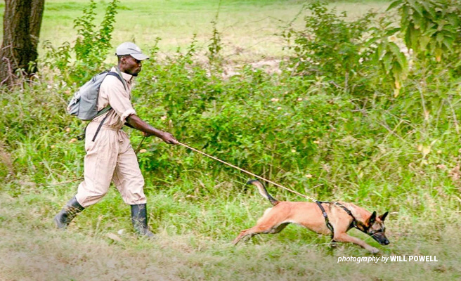 Photo of AWF-trained Tanzania National Parks Authority tracker dog and handler unit