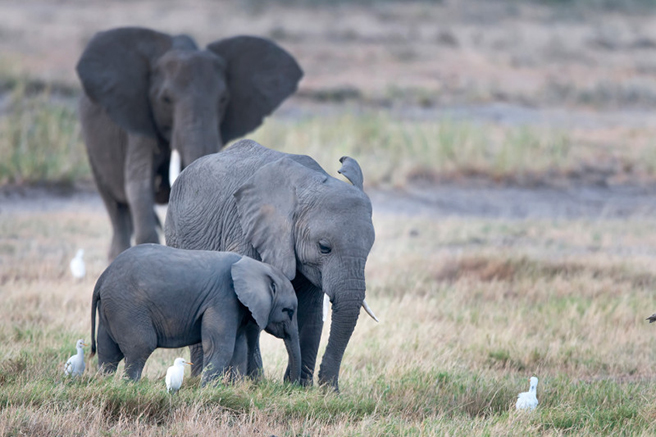 Gifts that give back to Africa's wildlife