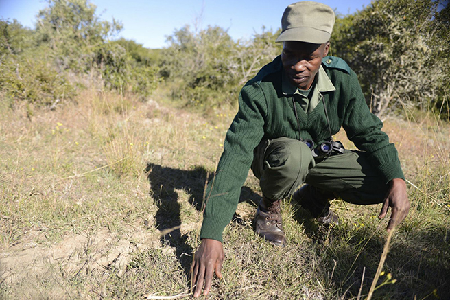 A ranger in the field at South Africa's Great Fish River Nature Reserve. Photo by: Billy Dodson