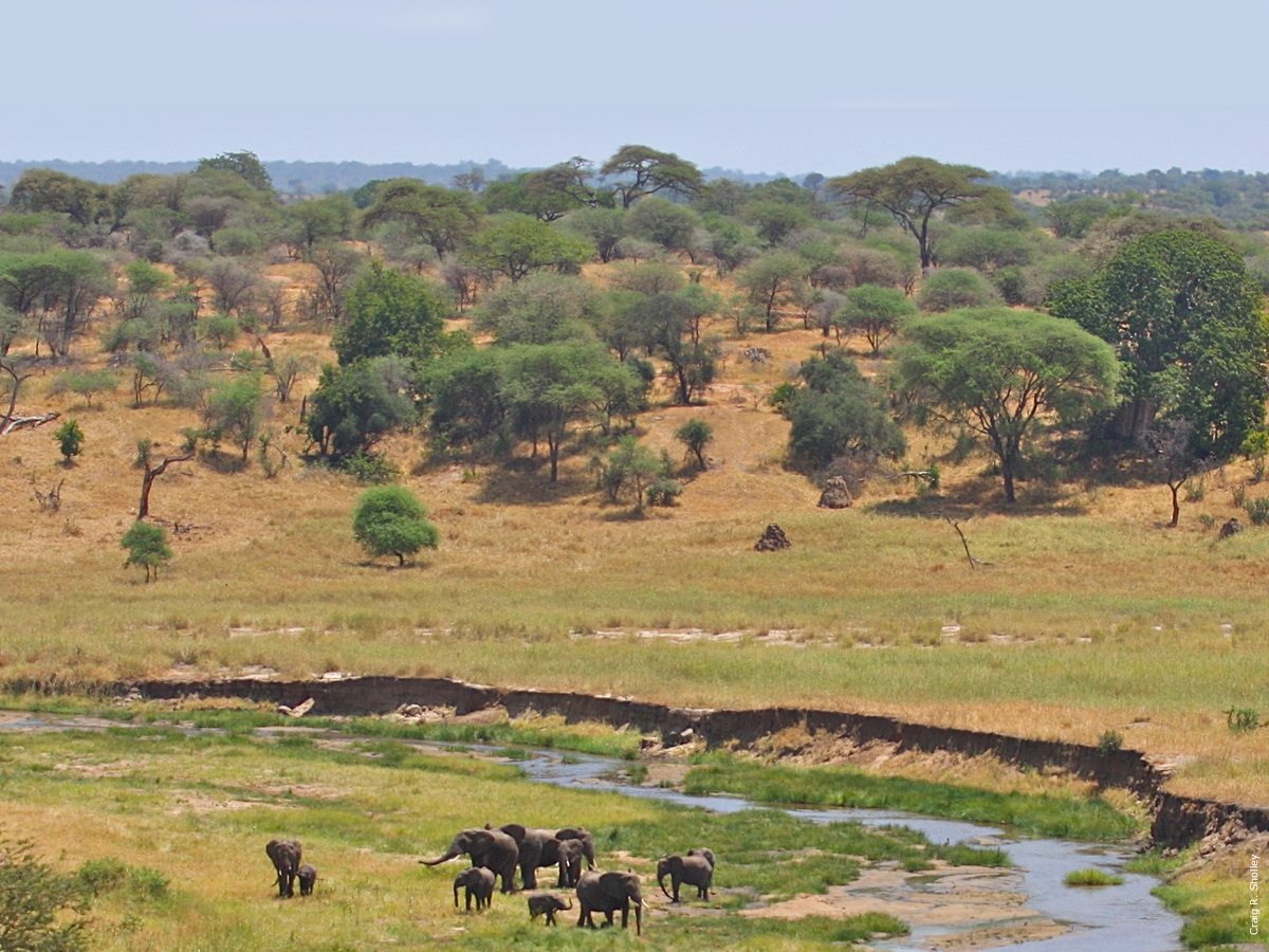 Ecosystems African Wildlife Foundation