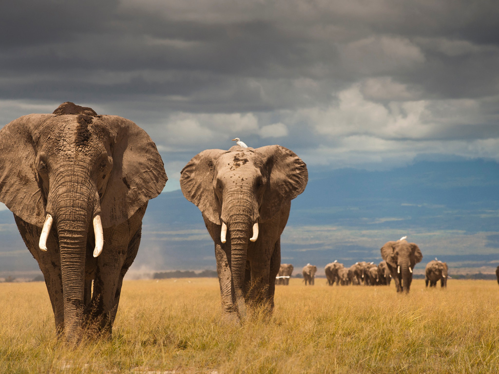 Top 10 Wild Life Blogs, elephant