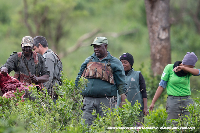 Rangers search a rhino carcass for incriminating evidence