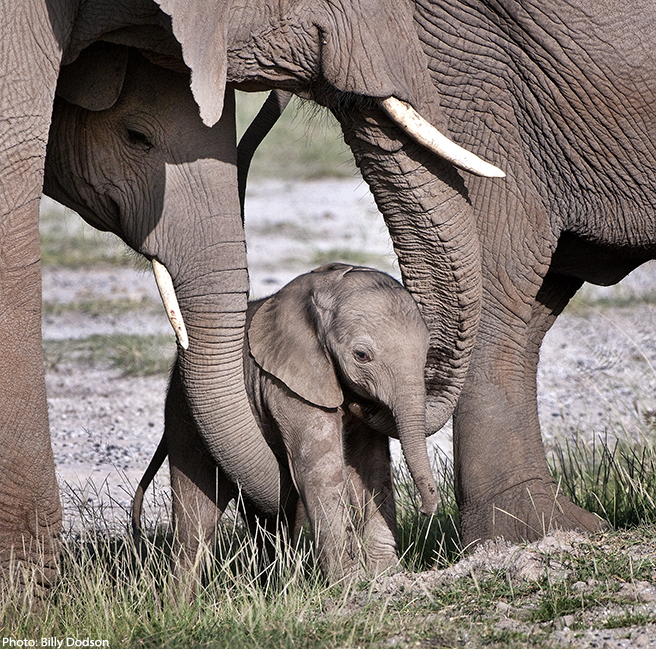 Tiny baby being cradled by mother and aunt at Amboseli.