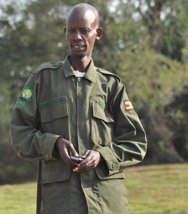 Uganda Wildlife Authority (UWA) ranger in uniform