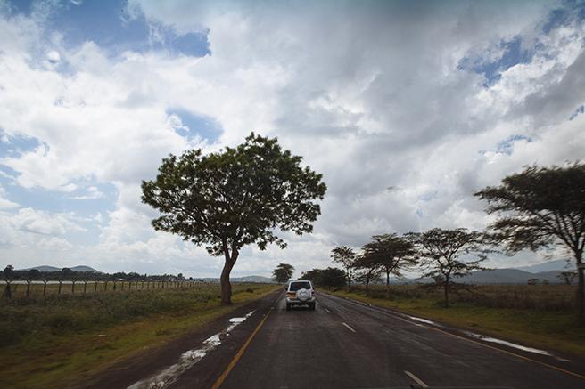 Manyara Ranch safari photographed by Dan Duran