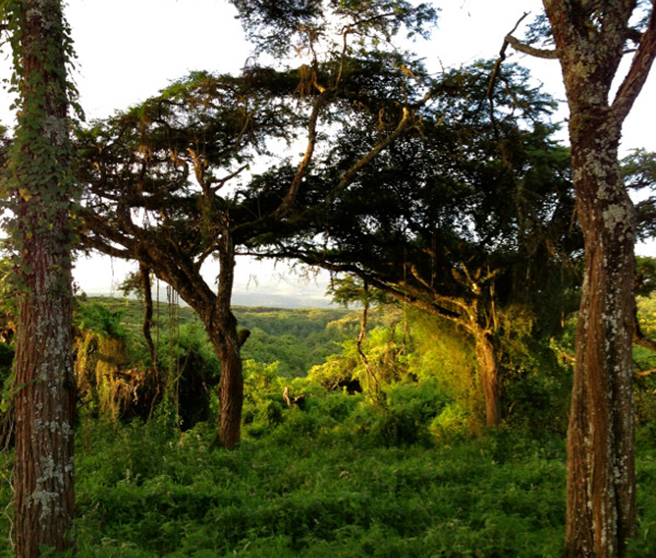 REDD+ Projects Protect Forests and Generate Income
