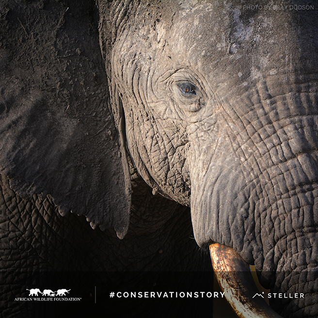 What Will Our Conservation Story Be?
