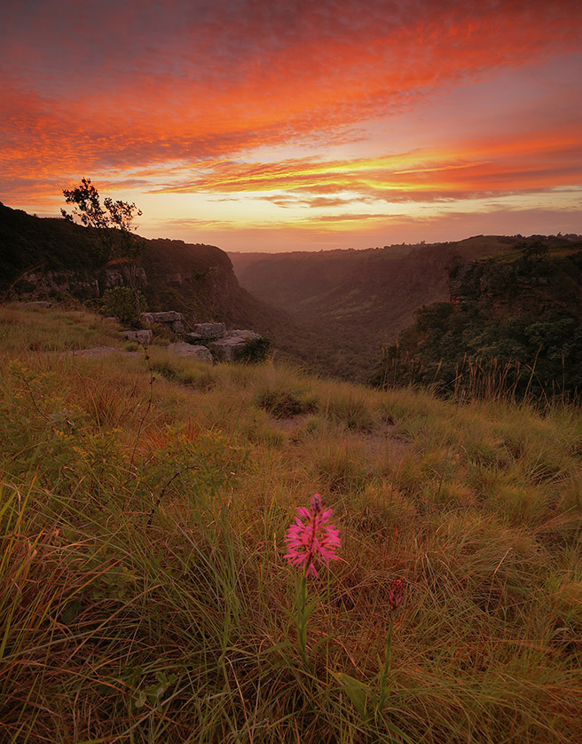 Krantzkloof Nature Reserve was taken by Andrew McKay