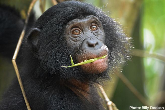 A Wealth of Biodiversity in Congo Basin