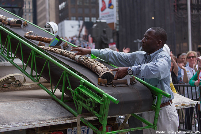 AWF's Jimmiel Mandima Feeds a Piece of Ivory onto the Crusher's Conveyor Belt