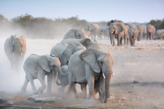 An elephant herd by a watering hole. Photo by Billy Dodson