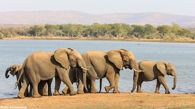Why Do Poachers Still Thrive? 5 Key Hurdles to Overcome to Stop the Slaughter