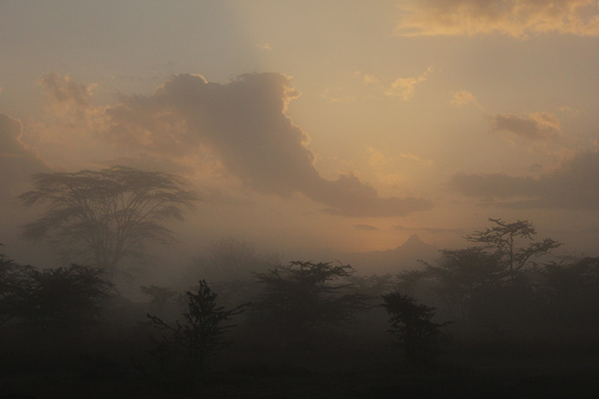 Dawn at Ol Pejeta Conservancy in Kenya. Photo by Olivia Cosby