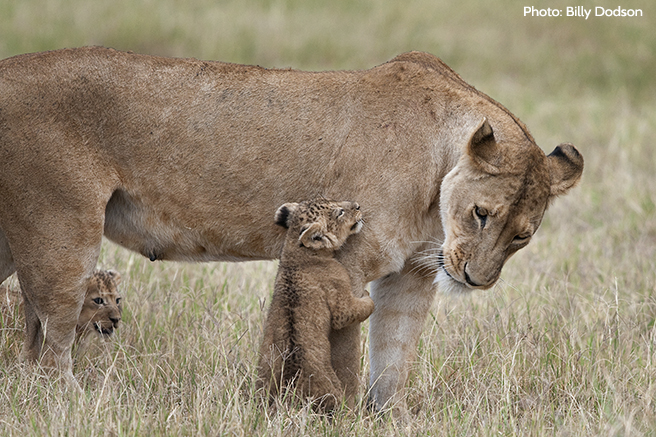 Giving Directly to Wildlife Projects Feels as Good as Getting Hugged by this Little Cub