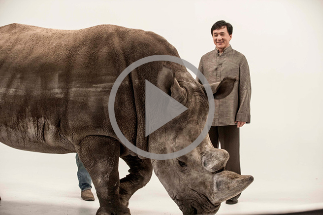 Jackie Chan and Spike the rhino video