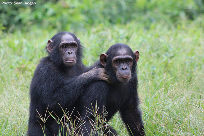 Tracking Chimps in Dindefelo