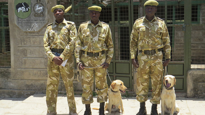 Kenya Wildlife Service handlers and sniffer dogs