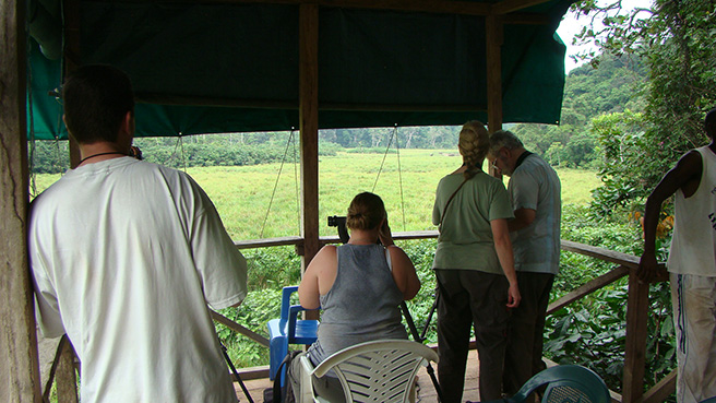 Tourists look at forest elephants at Langoue Bai in Ivindo National, Park, Gabon.