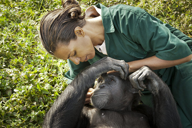 Lilly Ajarova, Executive Director of Chimpanzee Trust Uganda, examining a chimpanzee