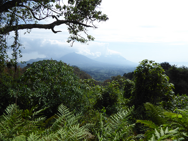 Mt. Bisoke, Virunga Mountains