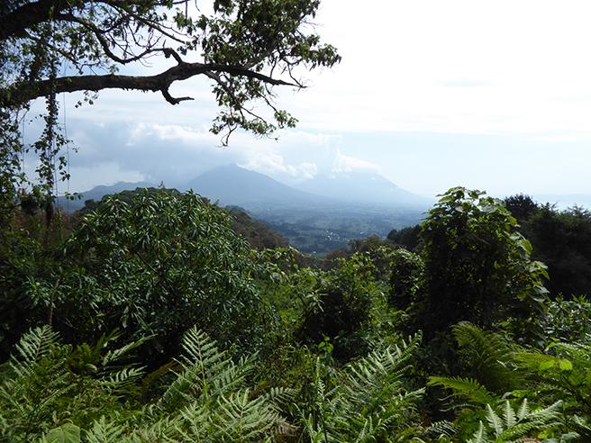 Mt. Bisoke, Virunga Mountains