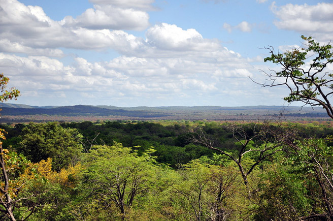 Gwayi Conservancy in Zimbabwe. Photo by Perrin Banks
