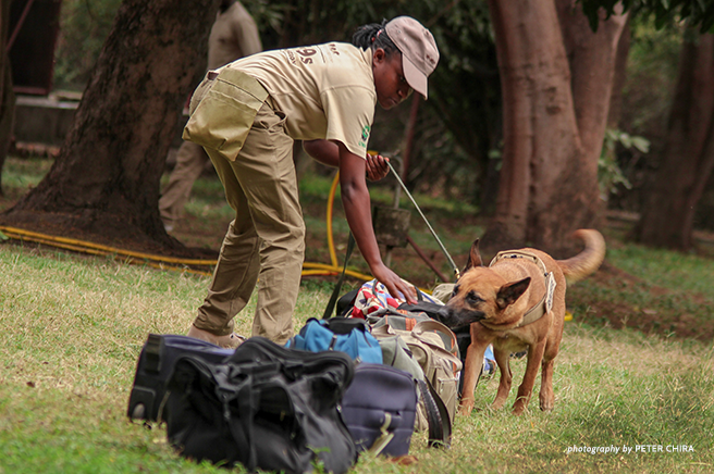 African Wildlife Foundation Canines for Conservation