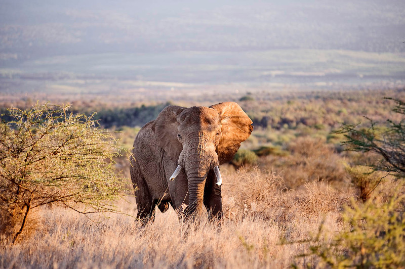 Elephant near Satao Elerai lodge in Kenya. Photo by Philip Muruthi