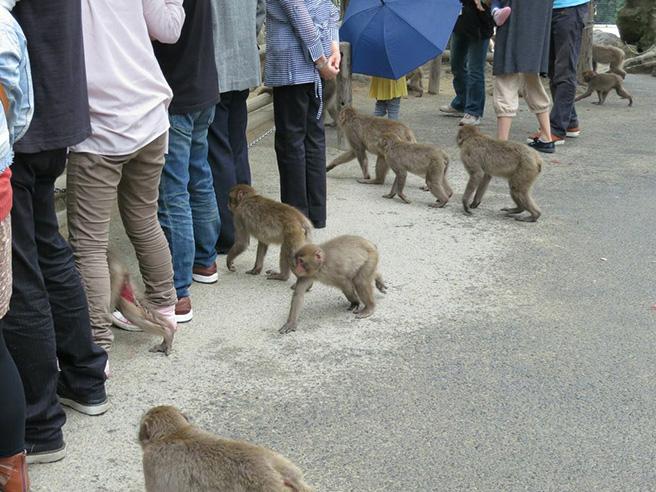 Takasakiyama Monkey Park, Japan.