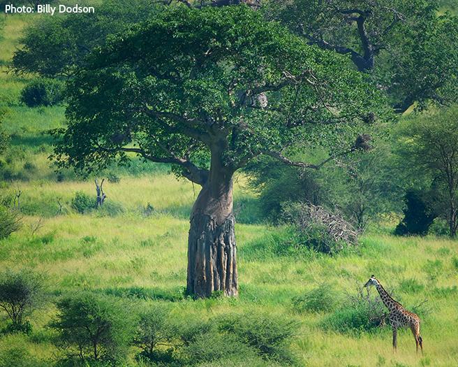 Safeguarding the Space Wildlife Needs