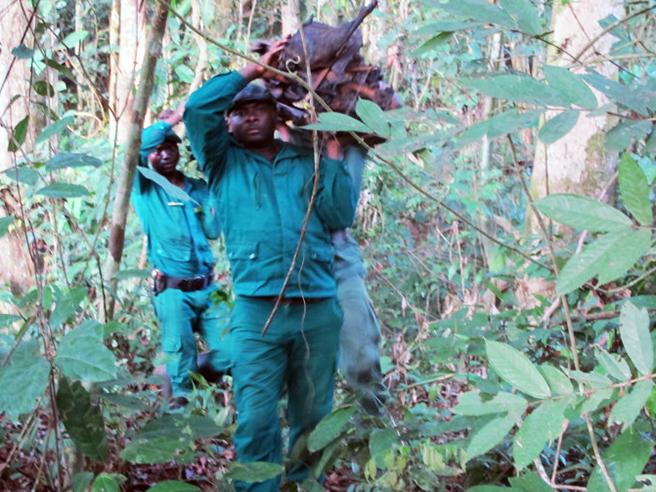 Ecoguard rangers in Cameroon
