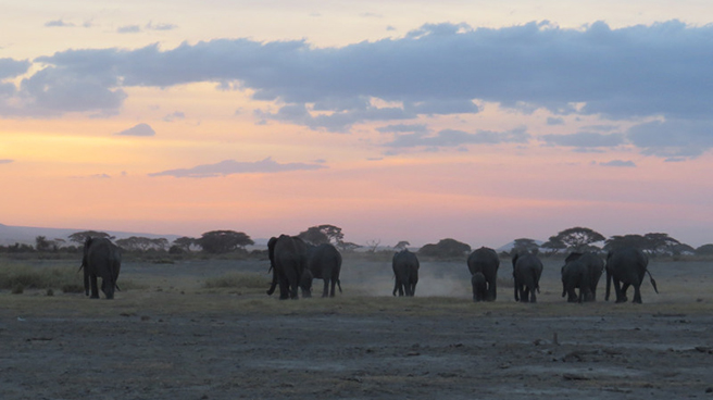 Elephant herd walking into sunset in Kenya.