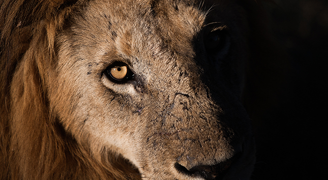 After Cecil: Keeping the Momentum Going