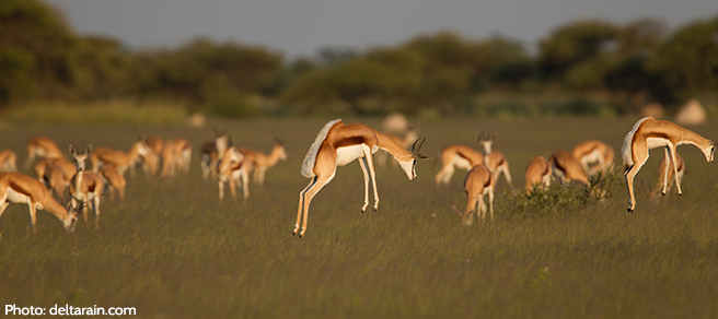 A Gazelle Jumps for Joy Over the Help Your Smart Purchases Give Wildlife
