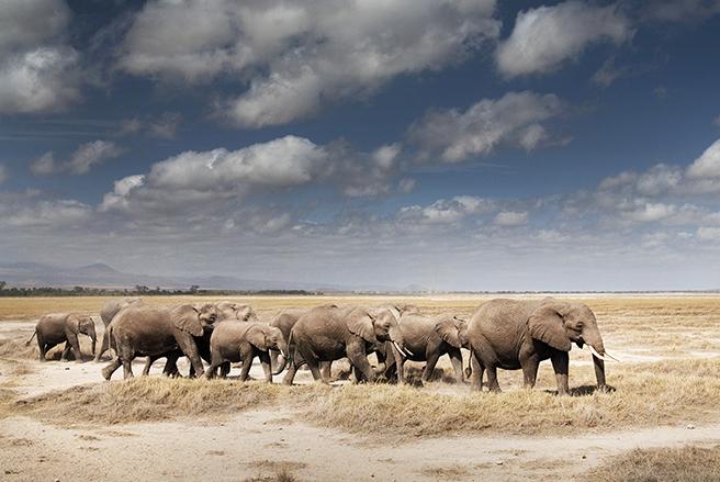 Elephants in Arusha National Park