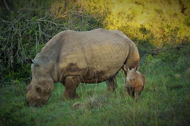 Baby Thembi and Thandi the rhino