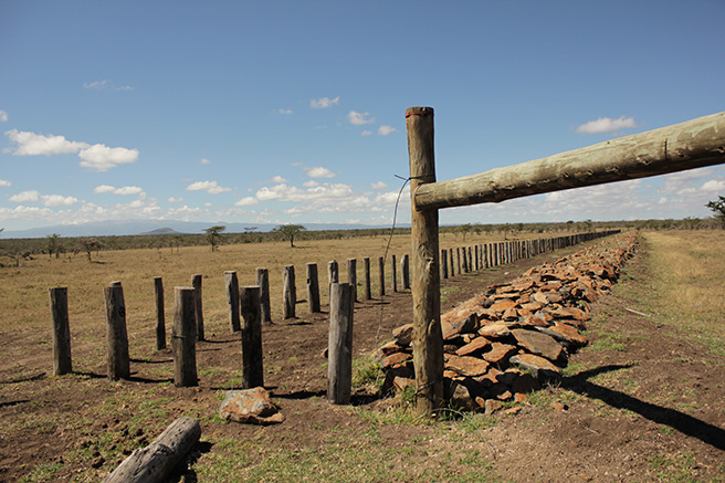 A wildlife corridor in Kenya. Photo by Olivia Cosby