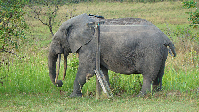 Billy the forest elephant scratching on the laundry pole. Photo by Stephanie Schuttler