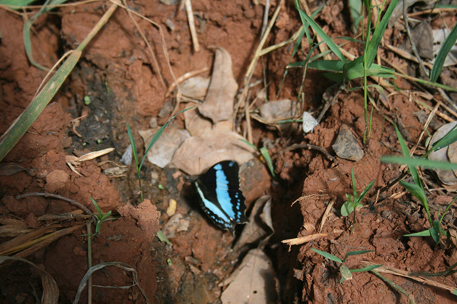 Butterfly sighting during the Kolo Hills biodiversity scoping expedition