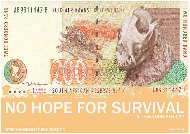 The South African R200 (Leopard) The Leopard is a skeleton, this is due to hunters/poachers killing them for their fur. By: India Hambloch