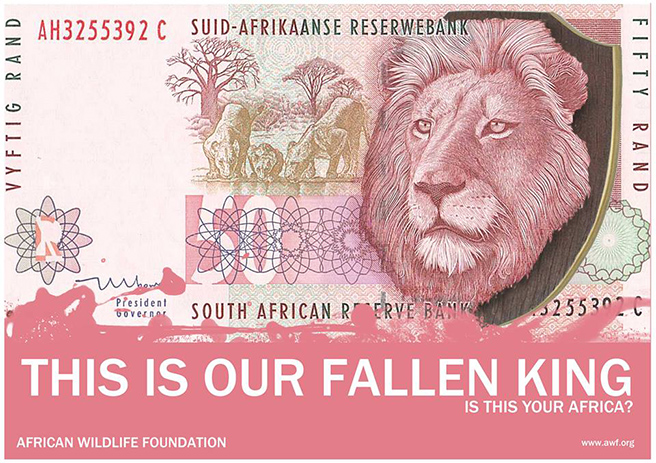 The South African R50 (Lion) The Lion's head has been placed on a Hunting wall mount, due to humans trophy hunting lions as a bravery task.  By: India Hambloch