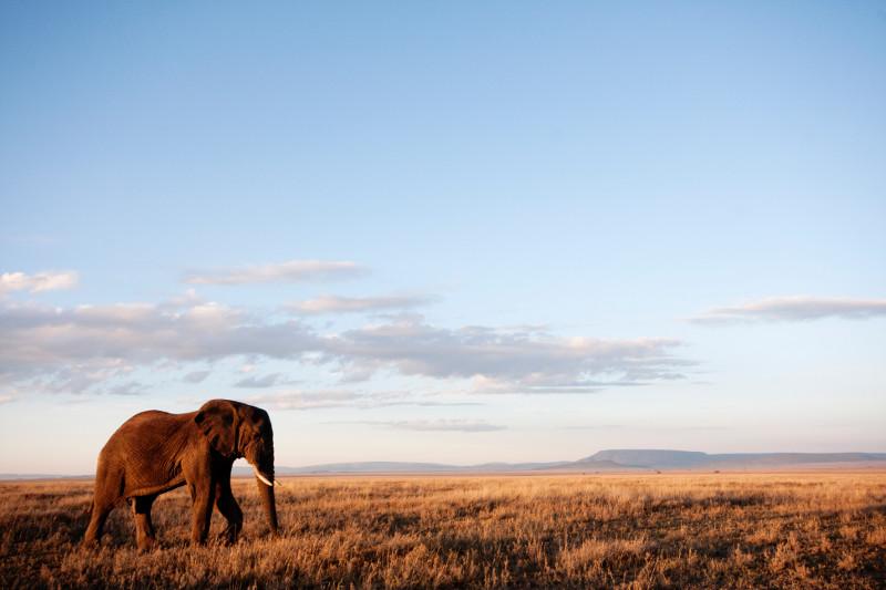 Elephant in landscape. Marius Coetzee