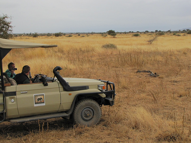 Manyara Ranch staff in AWF vehicle photographing African wild dogs. Photo by Tom Schovsbo