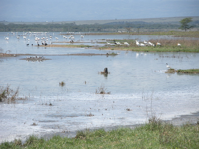 Photo of Lake Nakuru, located in the rift valley of Kenya. Photo by: Leslie Funk
