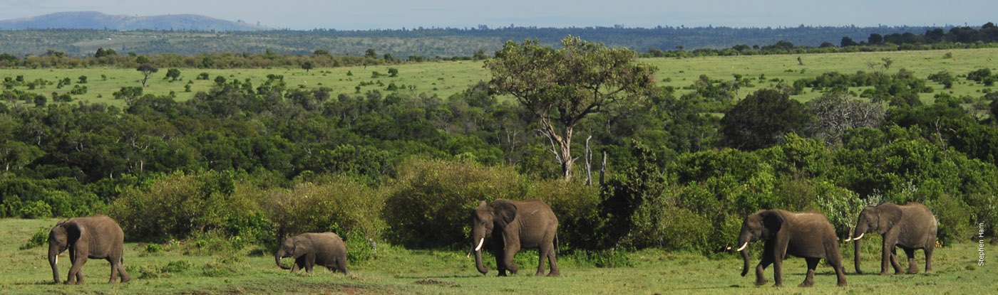 Land & Habitat Protection   African Wildlife Foundation