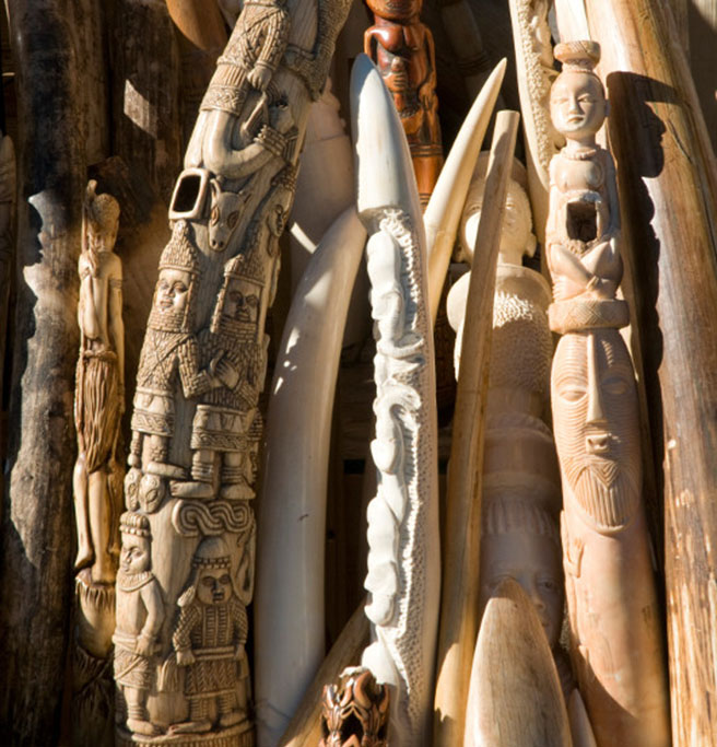 Illegal ivory confiscated by US Fish and WIldlife Services and destroyed in November 2013
