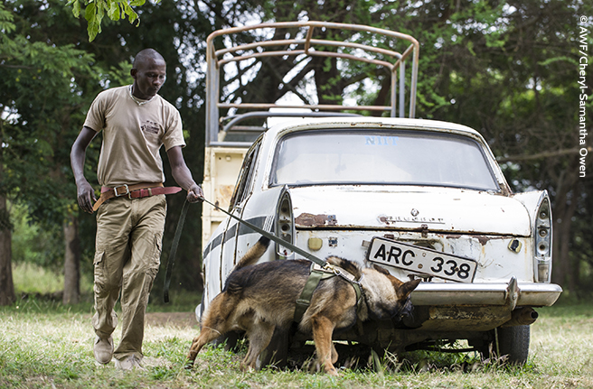 K9 Conservation Programme Demonstration